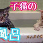 子猫を拾ってすぐにシャワーはNG!