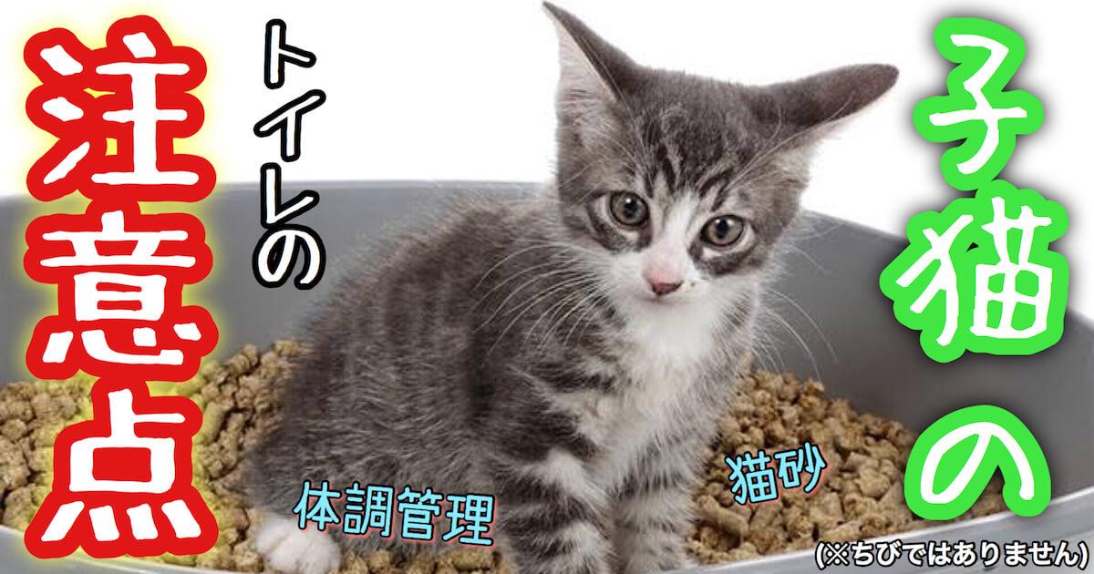子猫のトイレの注意点