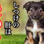 子犬と仲良く暮らすための5つのしつけ項目
