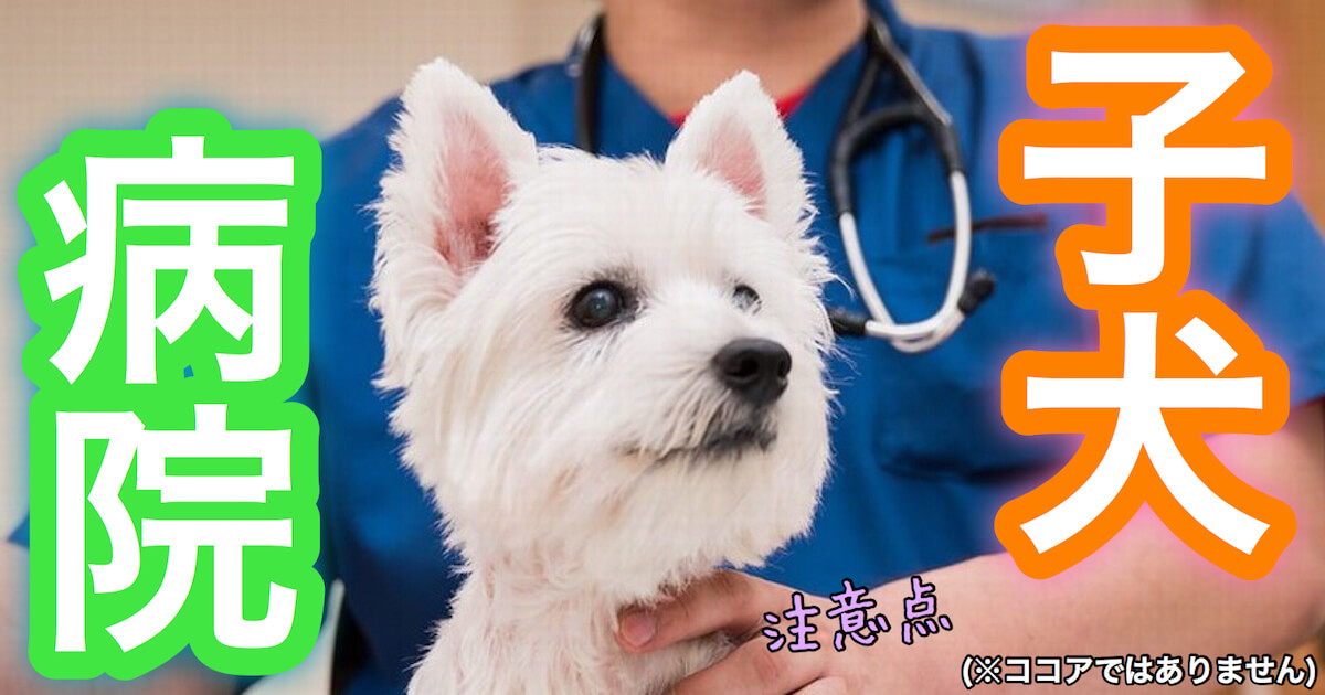 子犬の病院