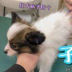 子犬への代表的な2つのワクチン