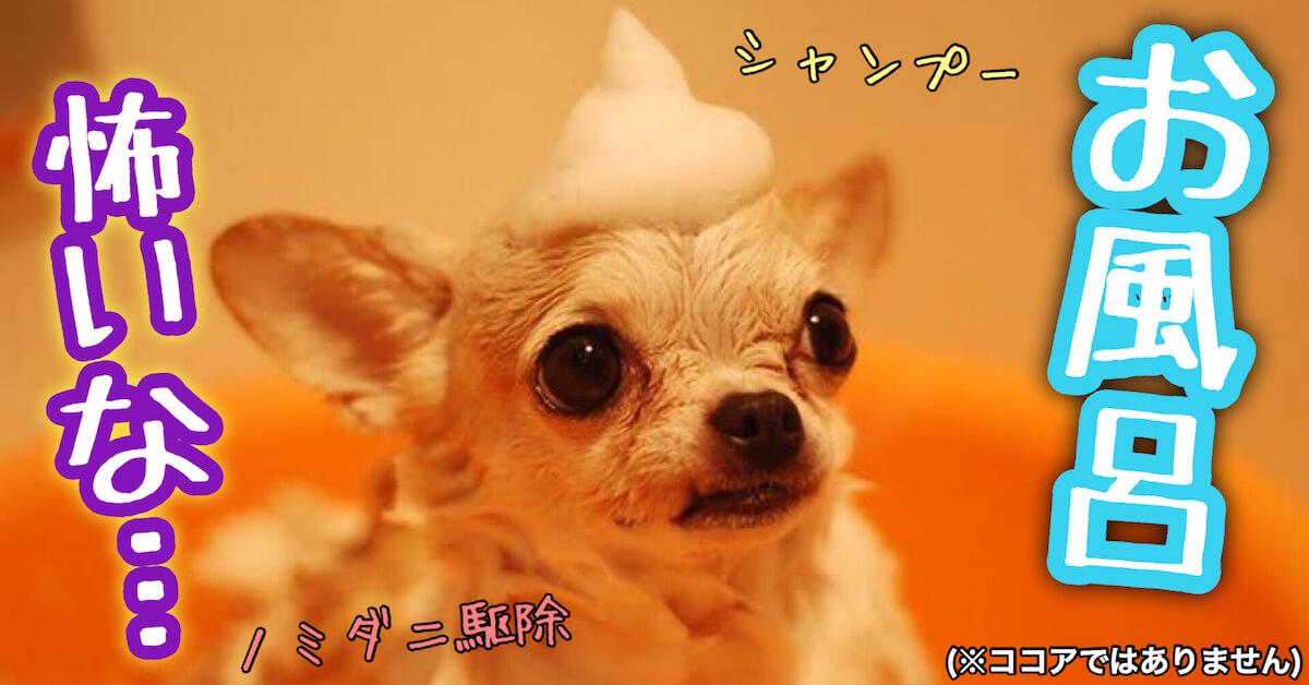 子犬のお風呂