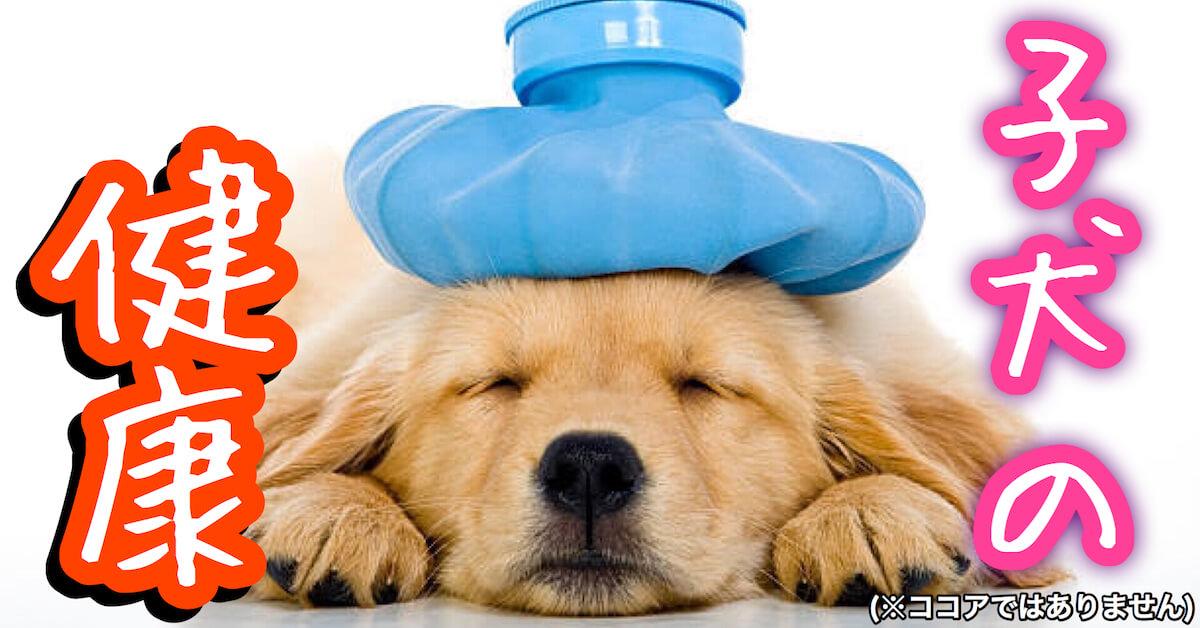 子犬の病気と健康