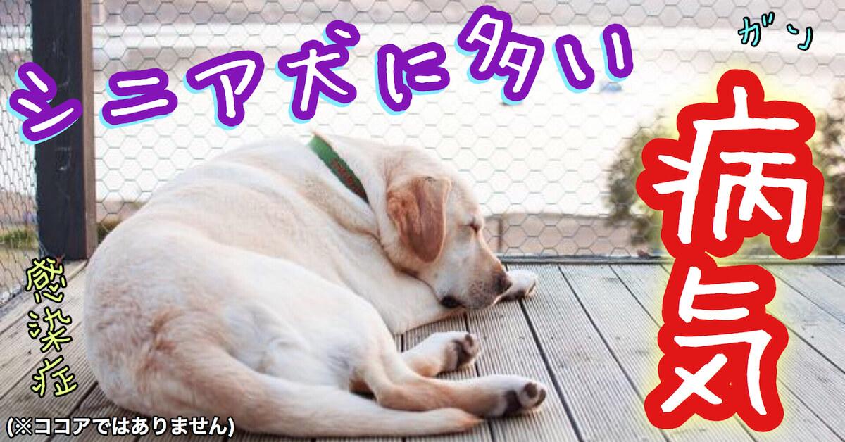 シニア犬に多い病気