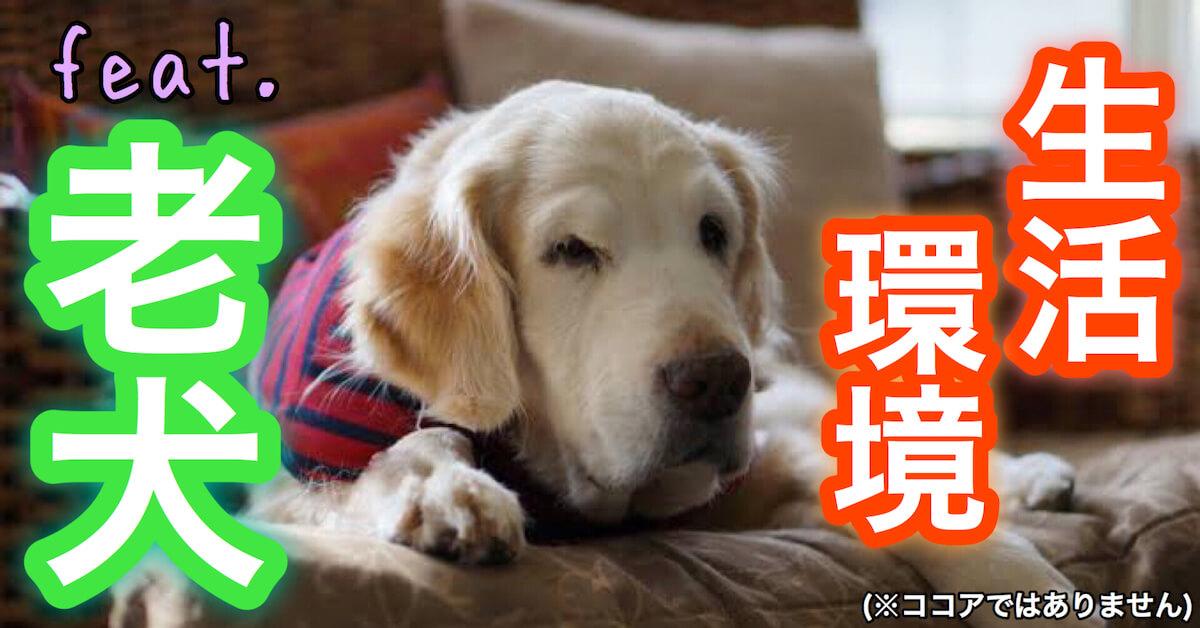 老犬の生活環境