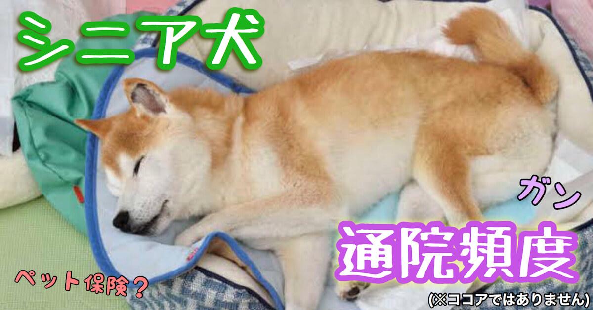 シニア犬の通院頻度