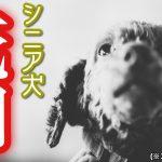 老犬が死ぬ前に見せる8つの行動とは?