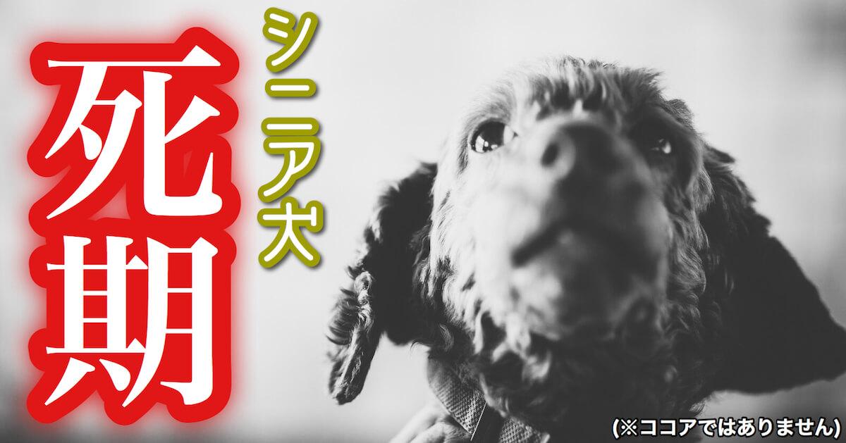 シニア犬の死期