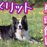 犬の単頭飼いでのデメリット…7個?
