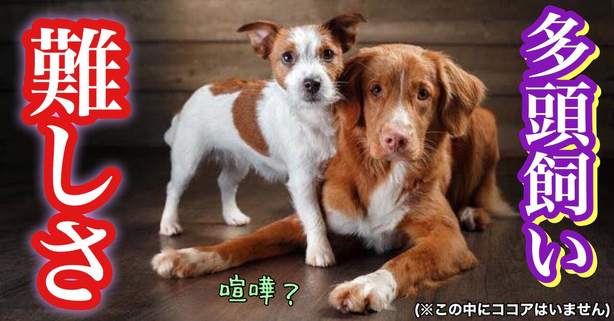 犬の多頭飼いの難しさ