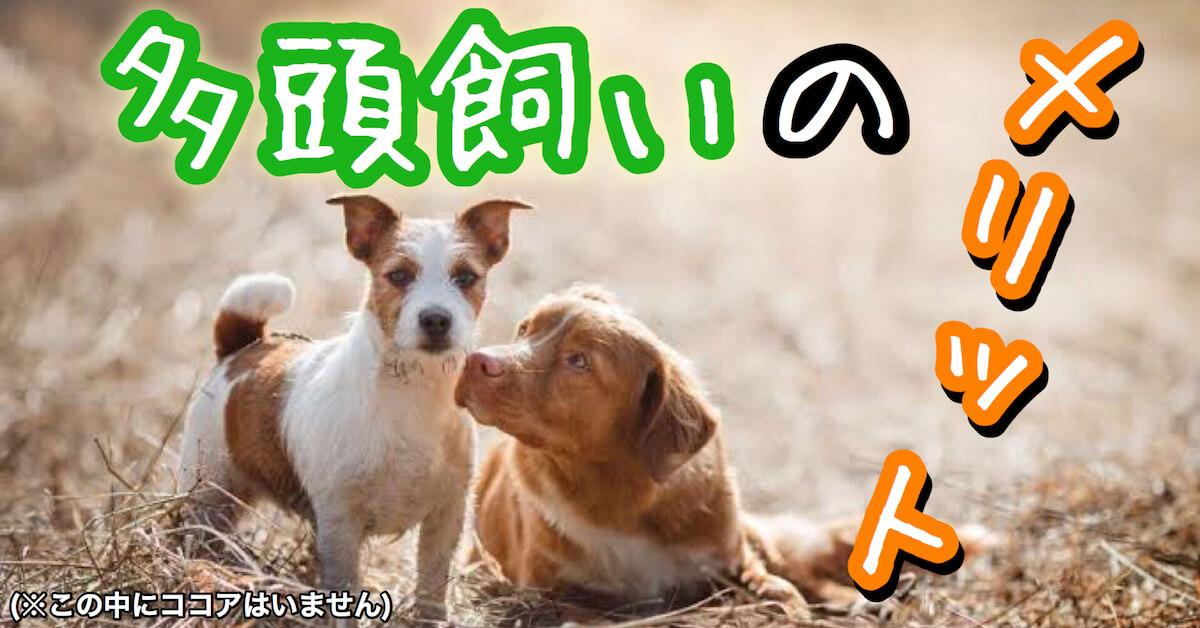 犬の多頭飼いのメリット
