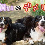 犬の多頭飼いで生じる6つのデメリット