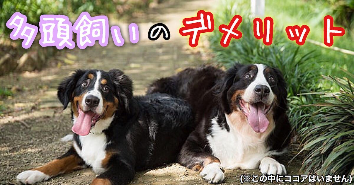犬の多頭飼いのデメリット