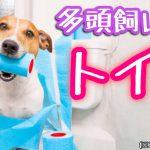 犬を多頭飼いする時のトイレの数は1つでOK?それとも分けるべき?