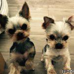 犬の多頭飼いでは必須の留守中のいたずら対策5選!
