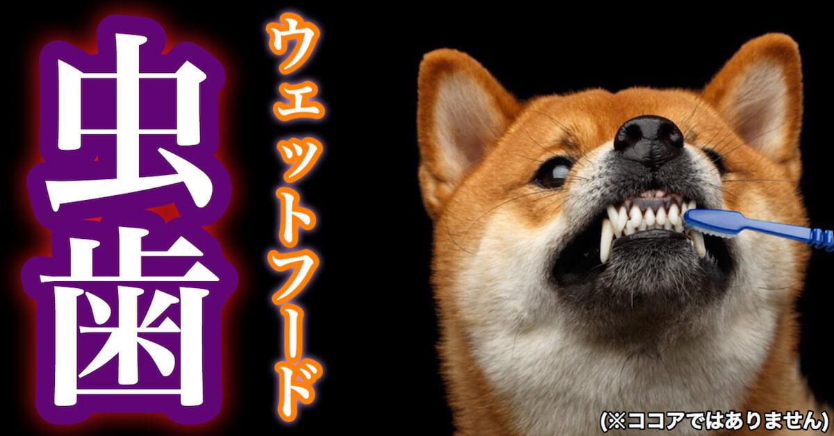 犬のウェットフードと虫歯