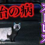 猫伝染性腹膜炎とは?