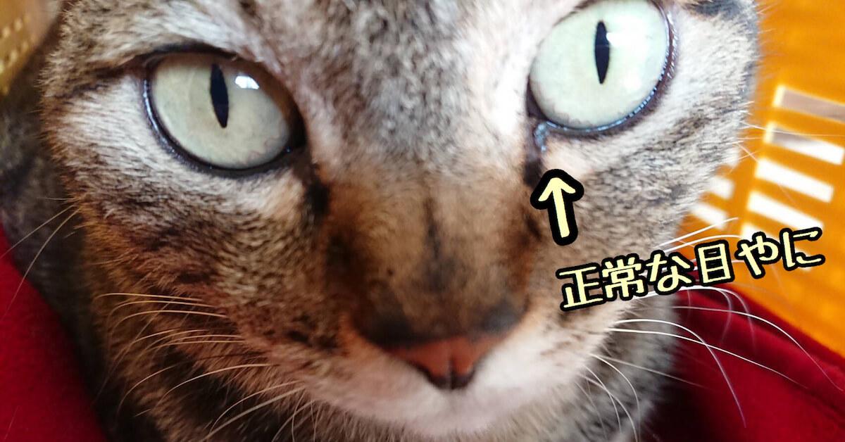 猫の正常な目やに