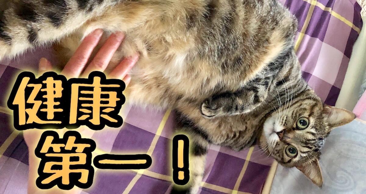 健康に気を使う猫