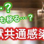 猫のトキソプラズマ症とは?