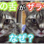 猫の舌はどうしてザラザラしているの?