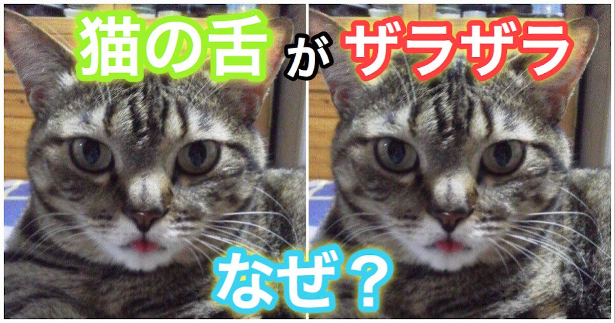 猫のザラザラした舌