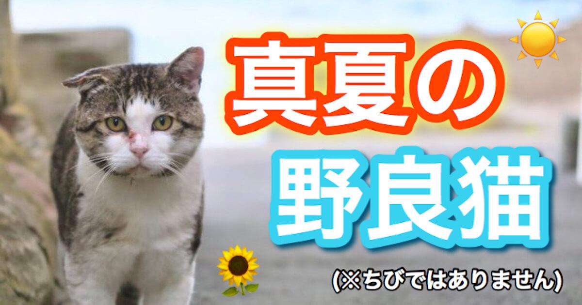 真夏の野良猫
