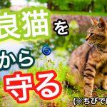 台風や地震などの自然災害時には野良猫をどう保護してあげるべき?