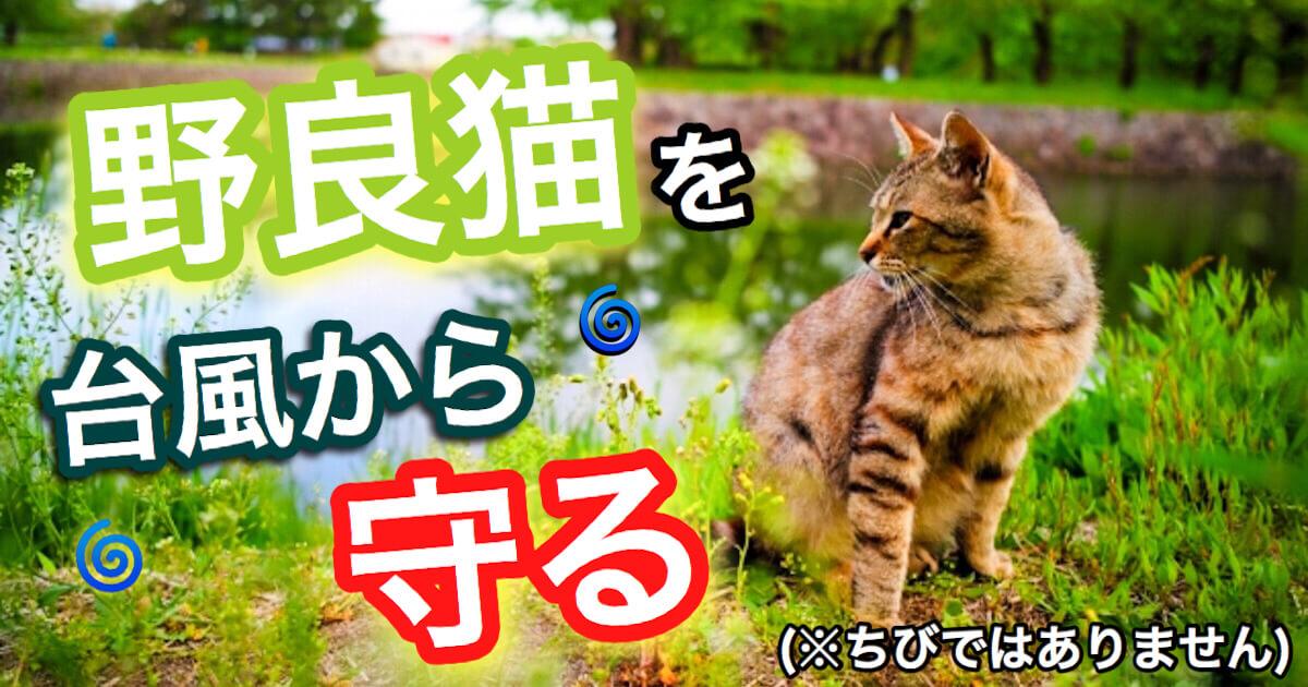 野良猫を台風から守る
