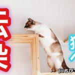 猫伝染性貧血(猫ヘモバルトネラ症)とは?