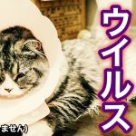 猫汎白血球減少症とは?