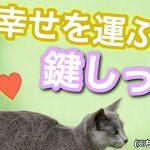 鍵しっぽの猫は幸せを運んでくれる縁起物