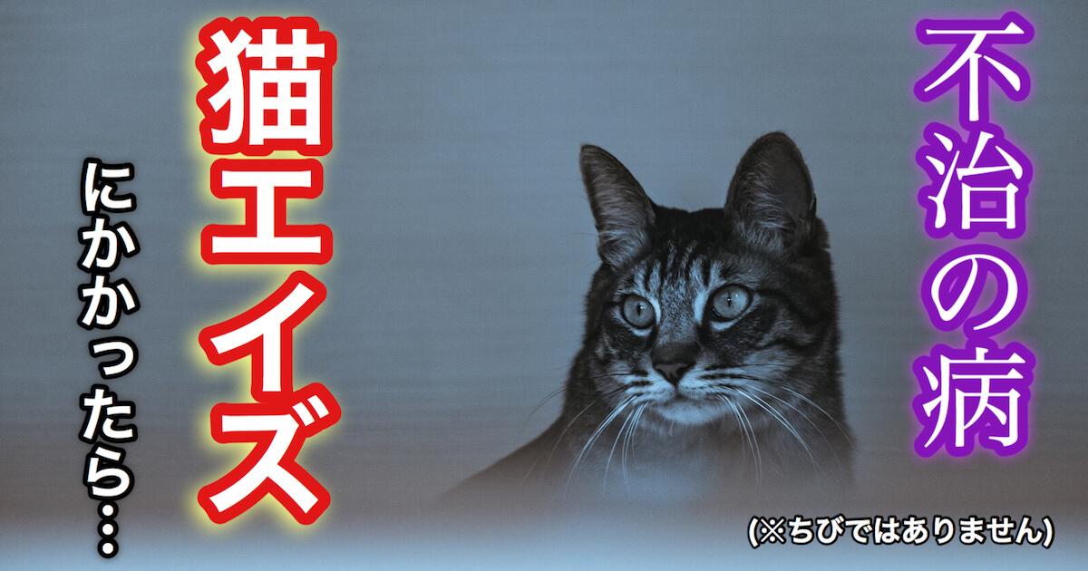 不治の病、猫エイズ