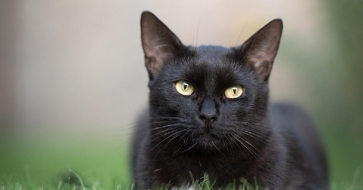 猫エイズウイルスに感染する原因