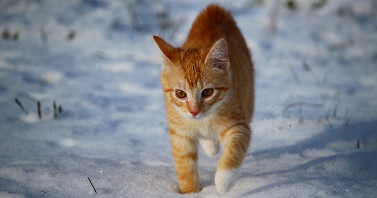 真冬の野良猫についてのまとめ