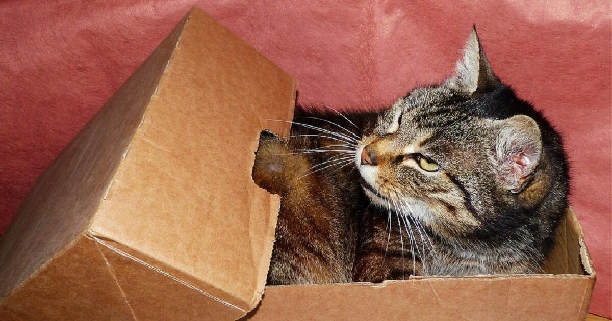 猫はどうしたらダンボールを食べなくなる?