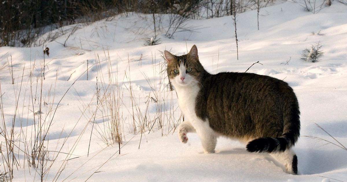 真冬の野良猫にできることとは?