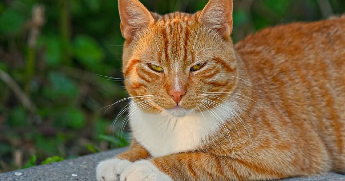 猫の鼻が赤くなる1番の理由は「興奮」