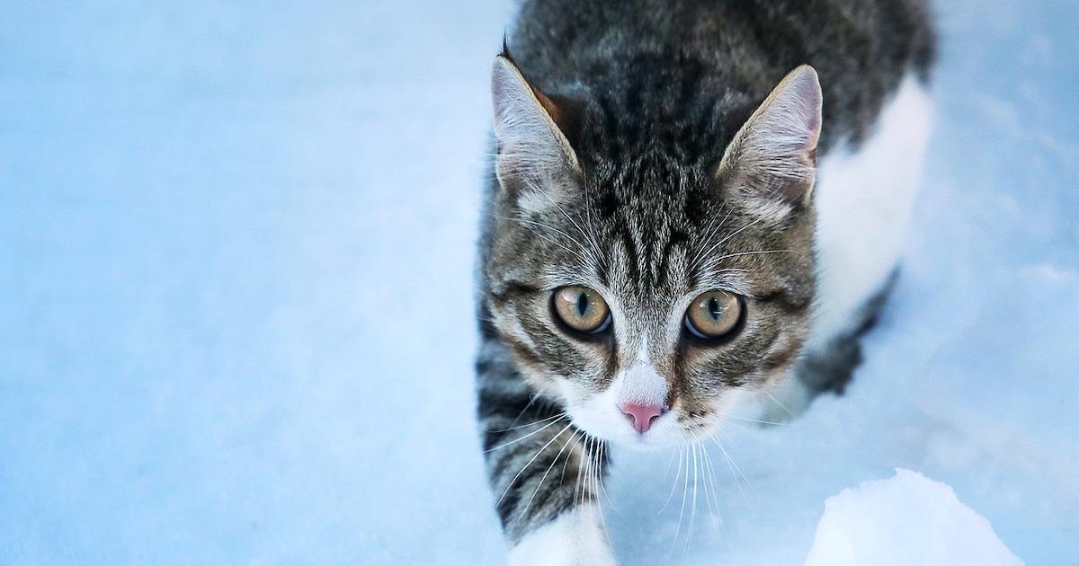 野良猫だって寒さには弱い