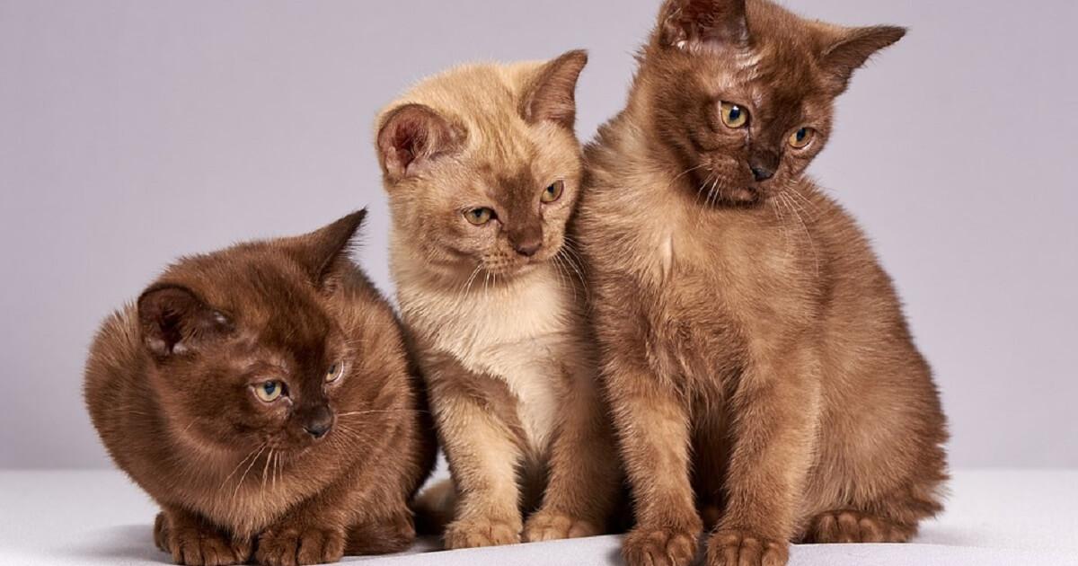 猫の多頭飼いを始めた理由