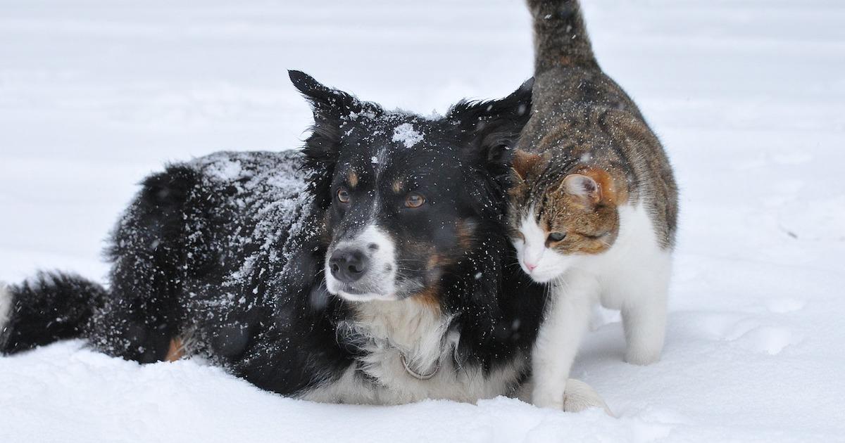 北海道の野良猫は真冬の過ごせるの?