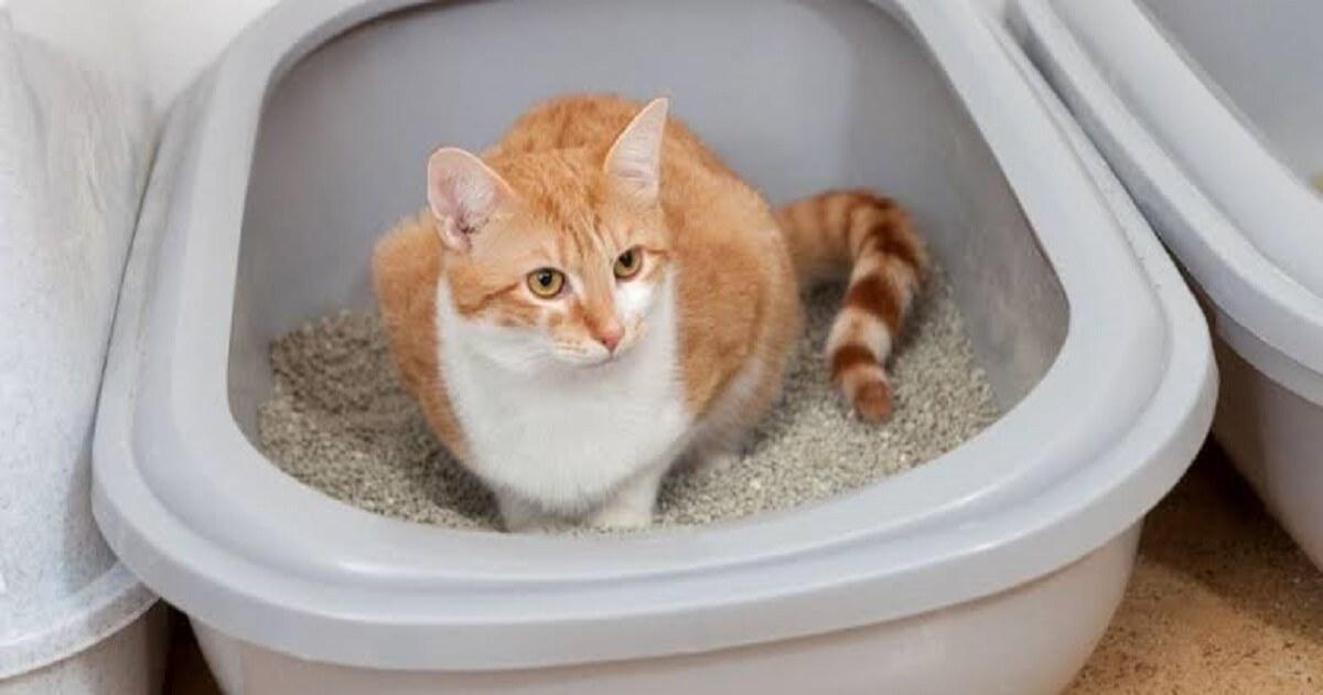 猫はトイレのしつけが重要