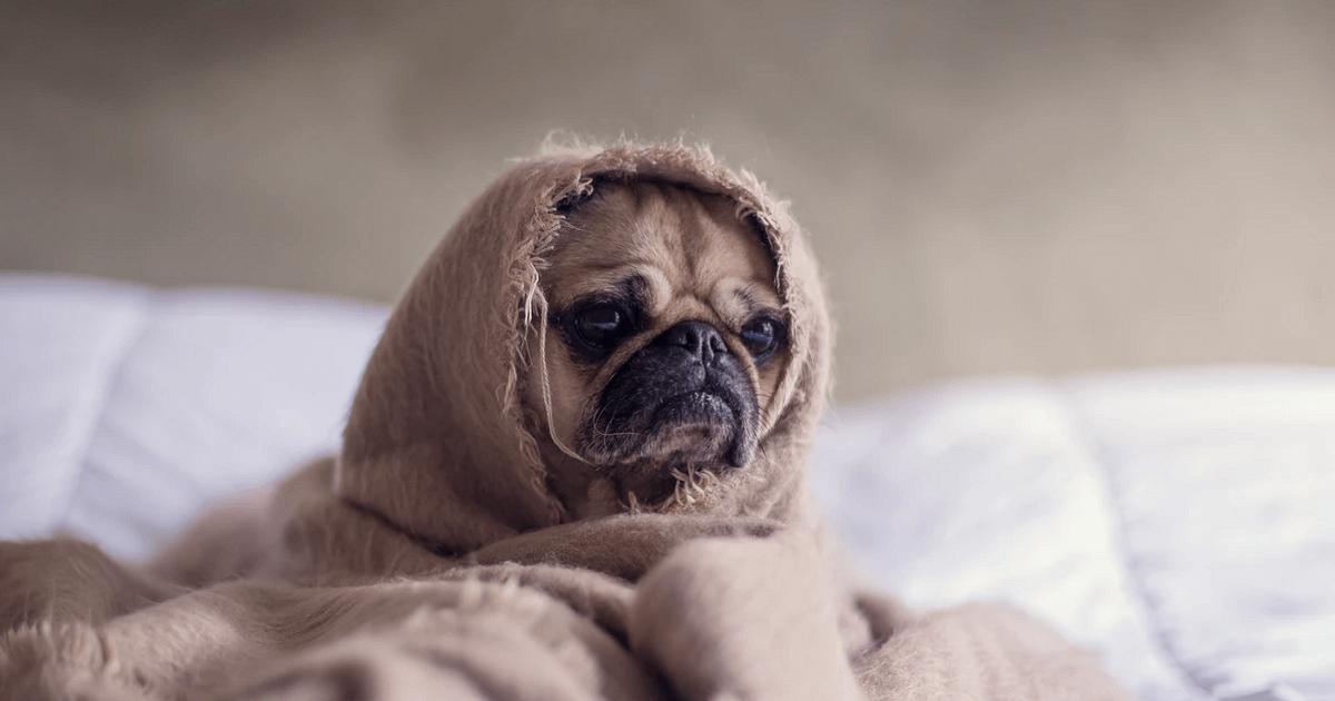 犬に点滴をしたときの副作用はある?