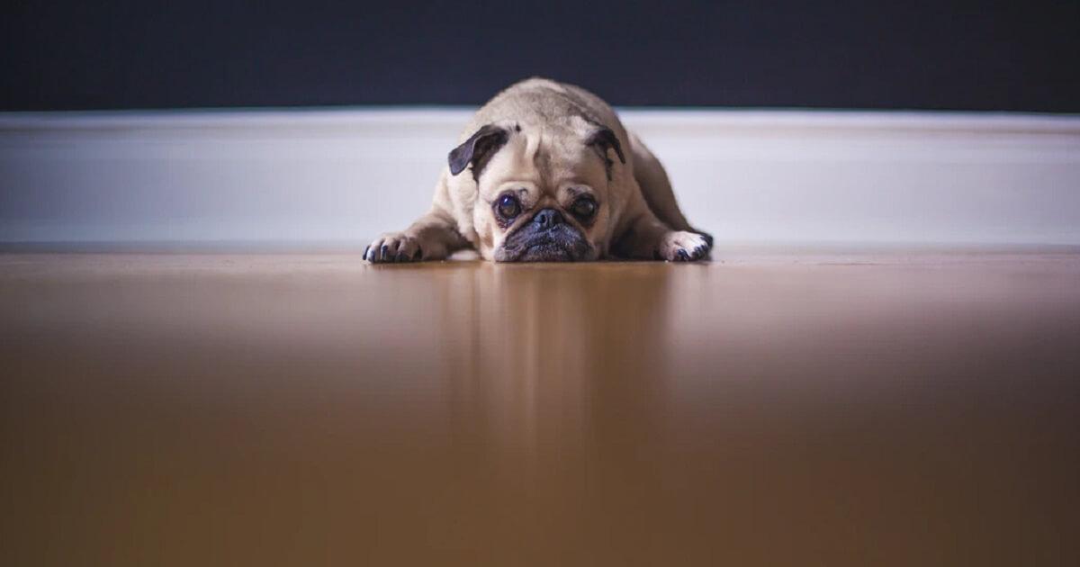 犬が死ぬ前兆の症状とは?
