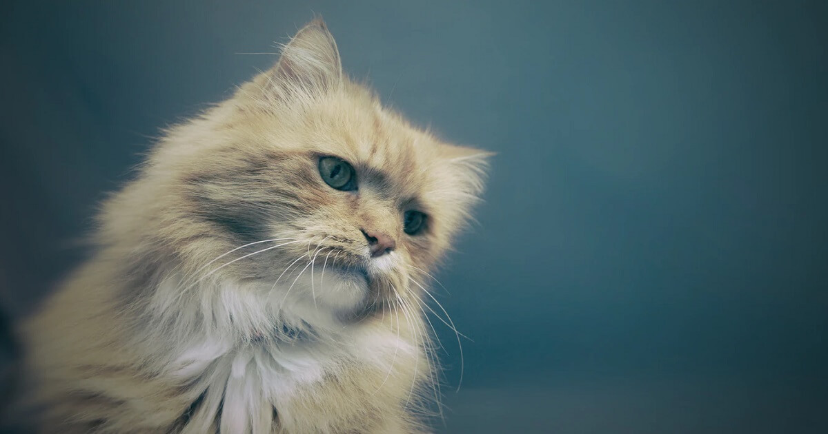 外傷・腫瘍・その他の猫の病気も考えられる