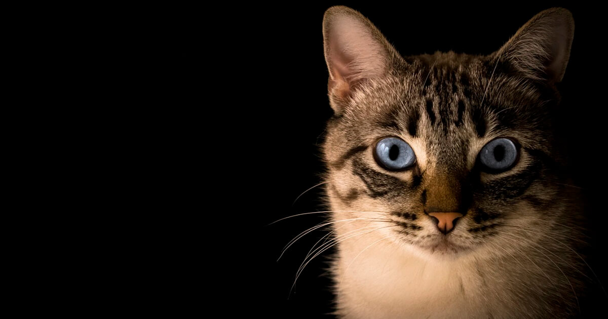 子猫には人間の食べ物を与えたら最悪死ぬ