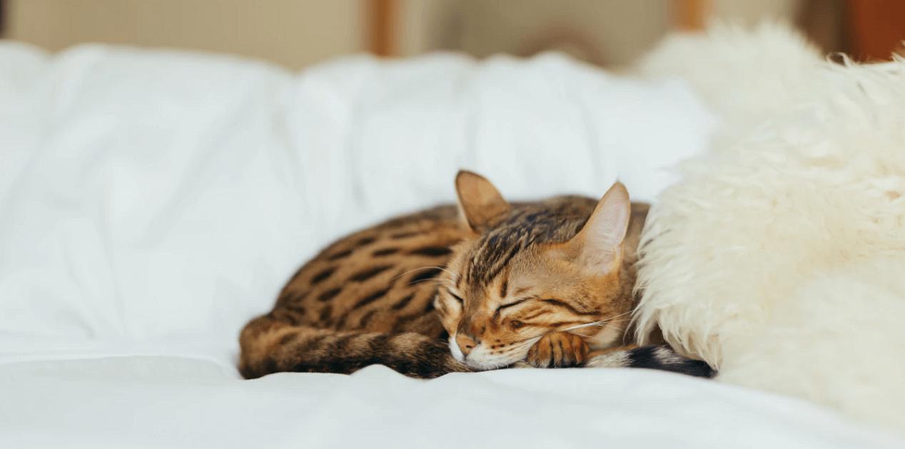 猫の毛が逆立つのは病気?