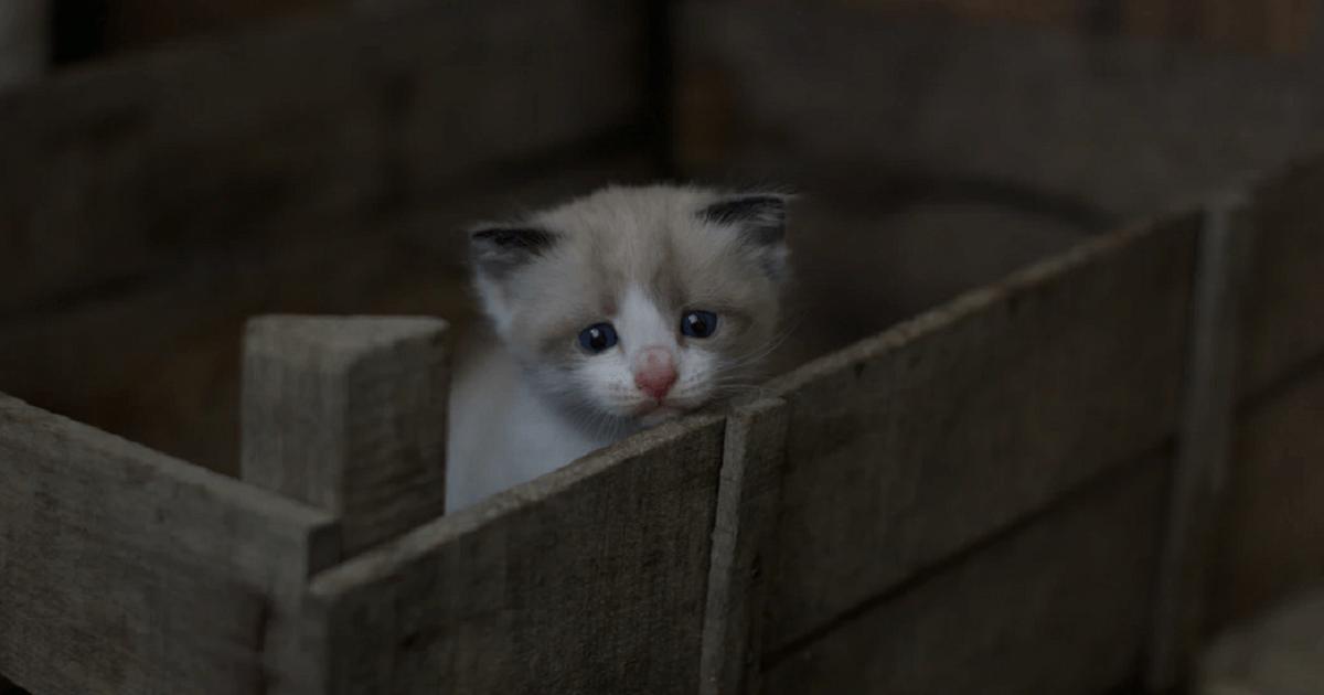捨て猫の状況を確認する