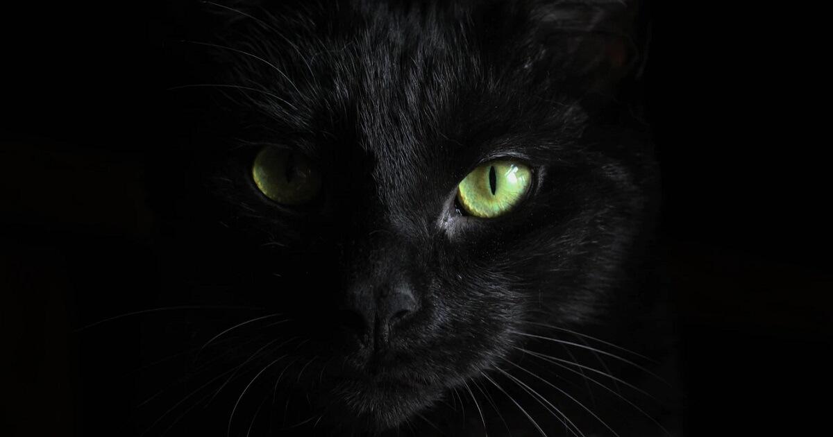 猫の去勢手術は失敗例もある