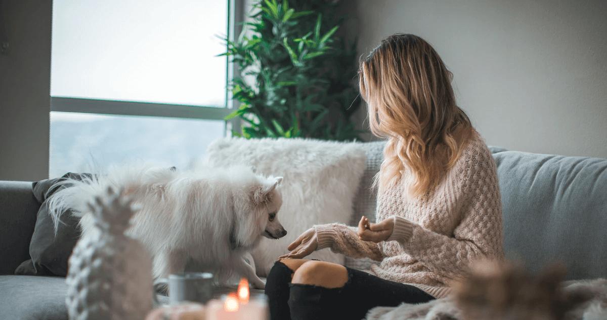 自宅で犬の皮下投与を行う際の注意点